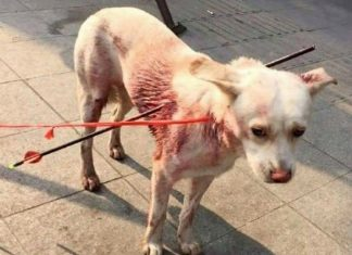 Dog Hit by Arrows in China