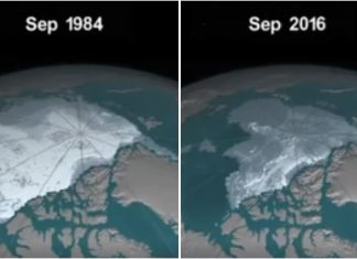 Images of the downsizing of the Arctic ice