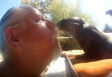 Swim with otters in California