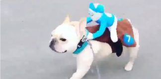 Dog running a jockey