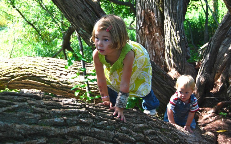 children climbing on trees
