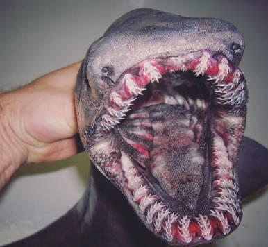 Mega Teeth Fish