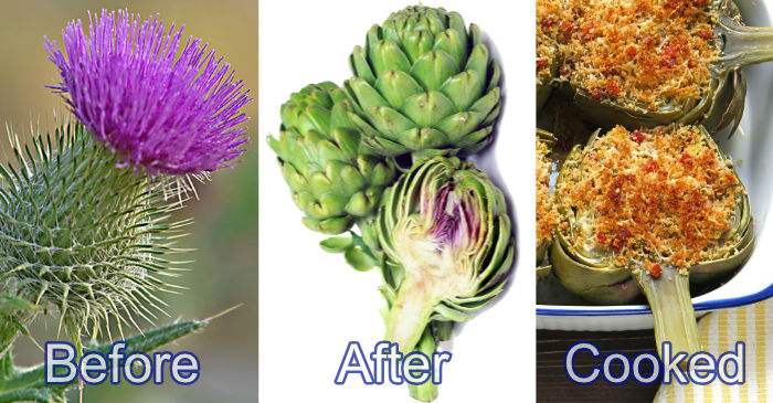 artichoke before after cooked