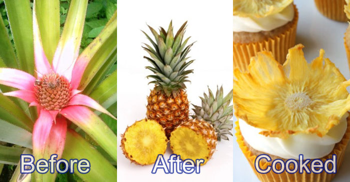 pineapple before-after-cooked