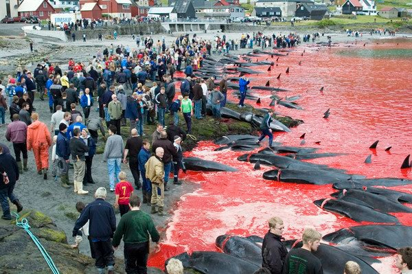 faroe islands people looking whale massacre