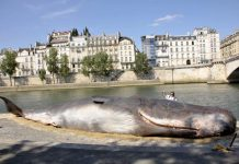whale seine paris