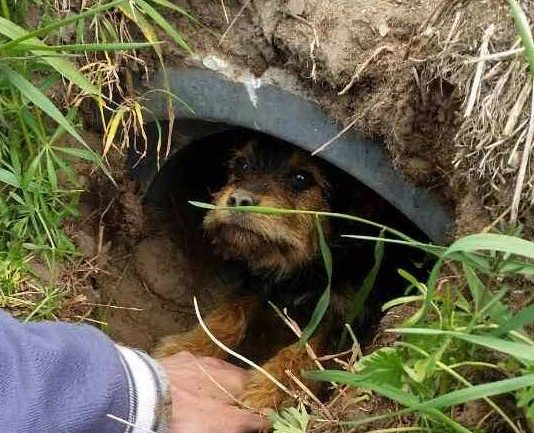 dog rescue ditch in poland