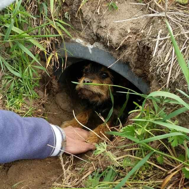 dog rescue ditch poland