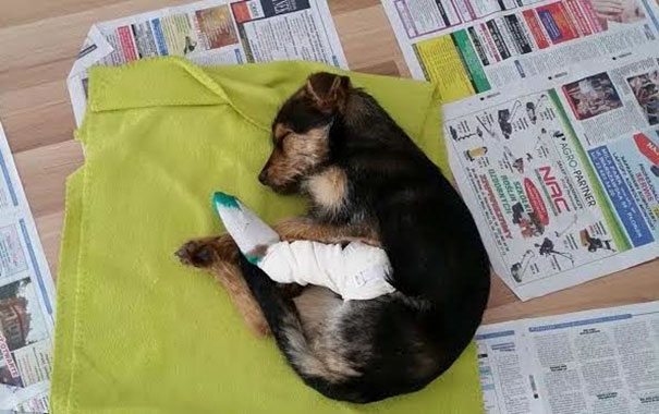 injured dog found ditch poland