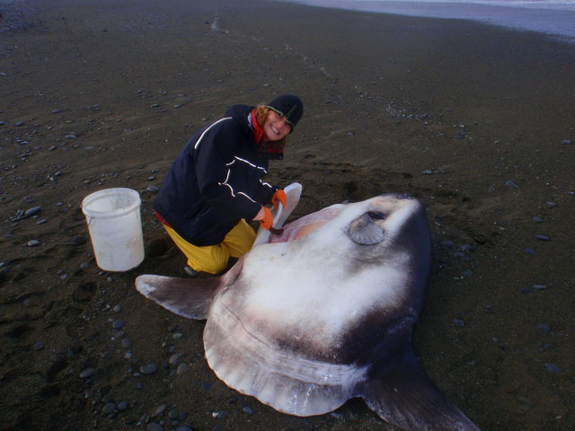 marianne nyegaard and giant fish