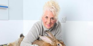 giant rabbit graceannette edwards