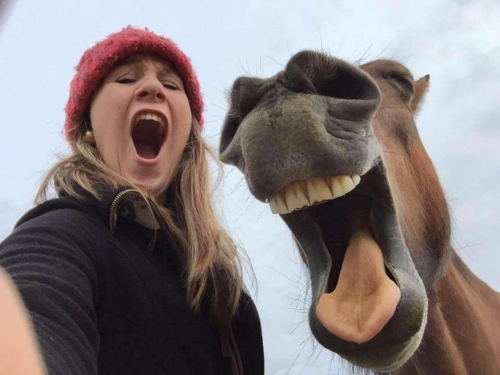 horse screaming with his owner