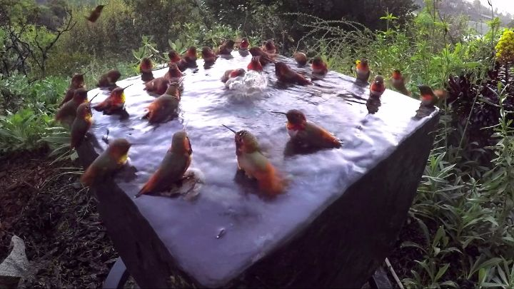 hummingbird pool party