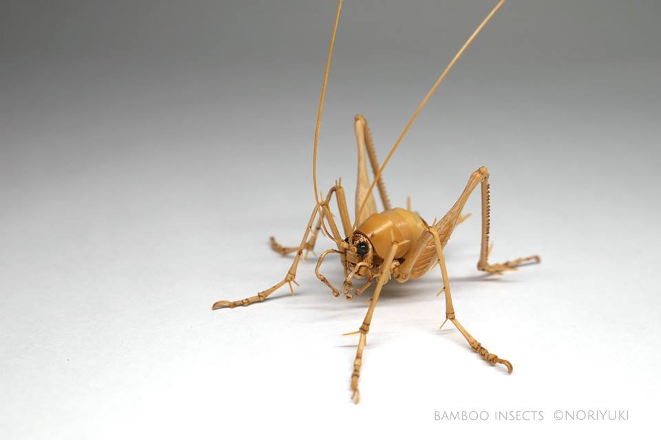 camel cricket female bamboo insects
