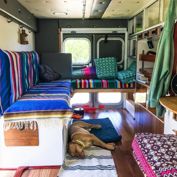 dog inside ambulance transformed into travelling house