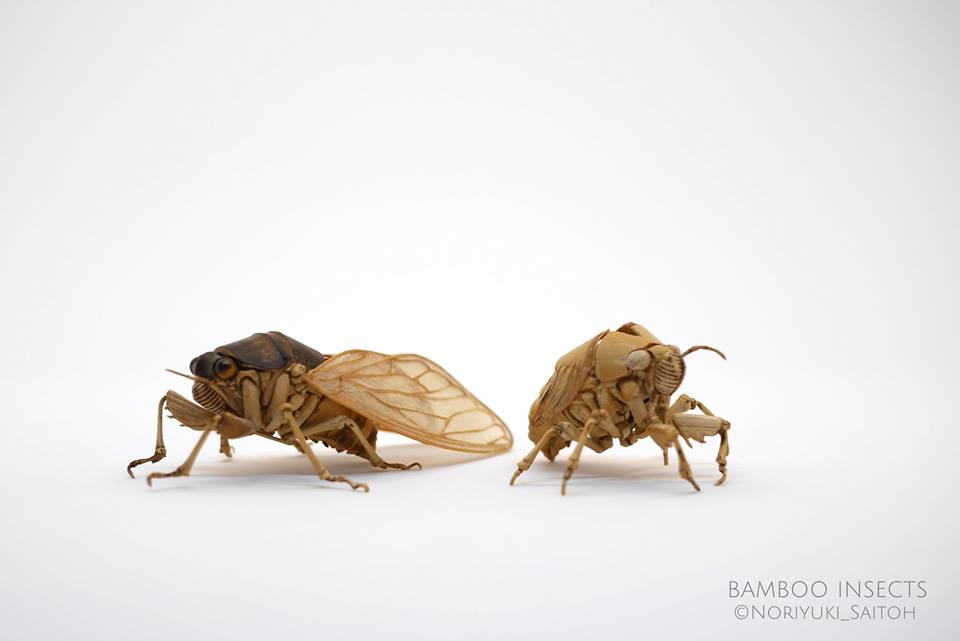 large brown cicada bamboo insects